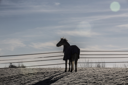 Silhouette Winter Scene Emma Lowe Horse Photography