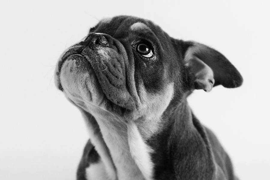Gilbert – Pet Photography