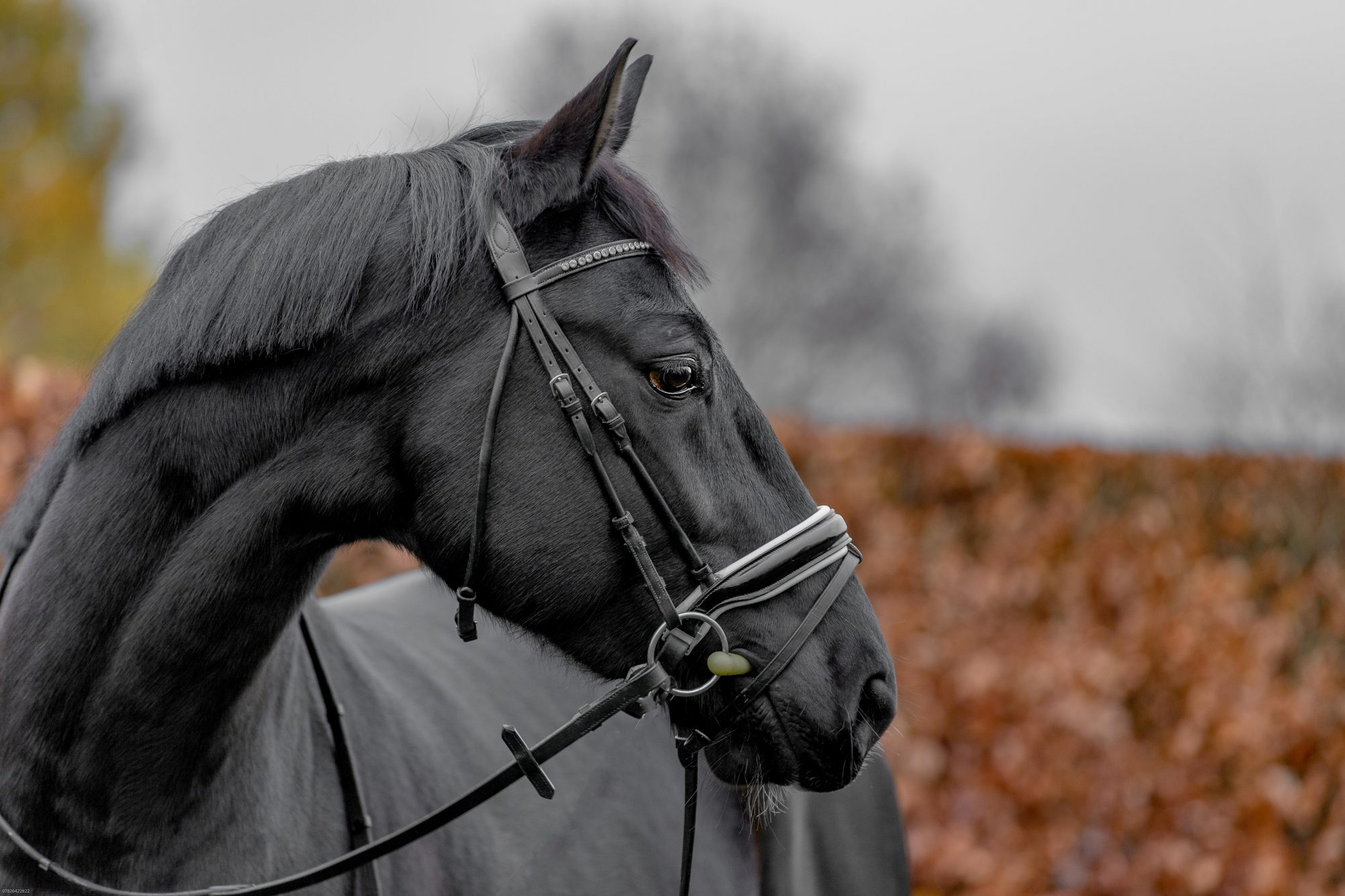Niina – Dressage – Emma Lowe Photography