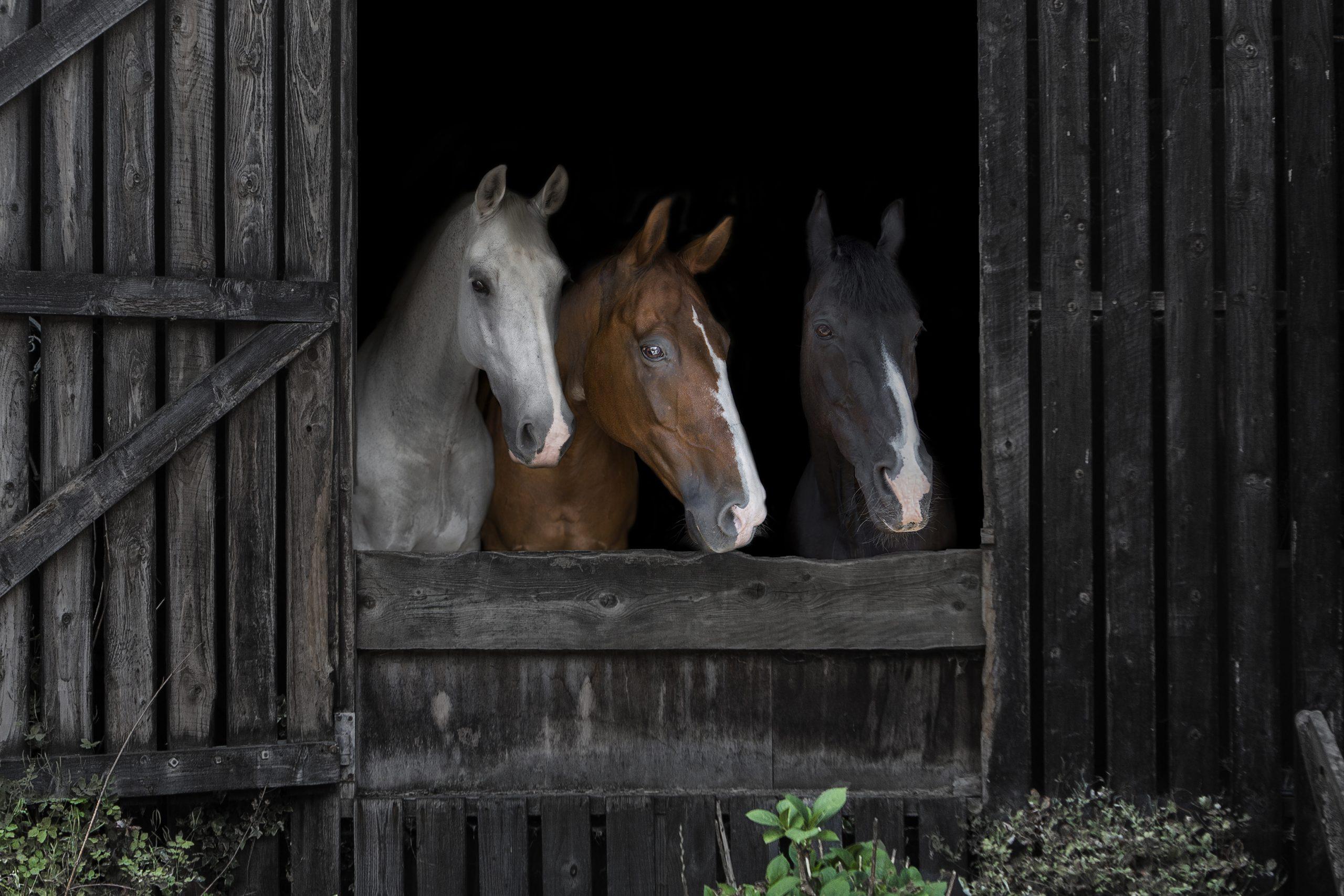 Emma Lowe Horse Photography – Nemo, Uno & Reble