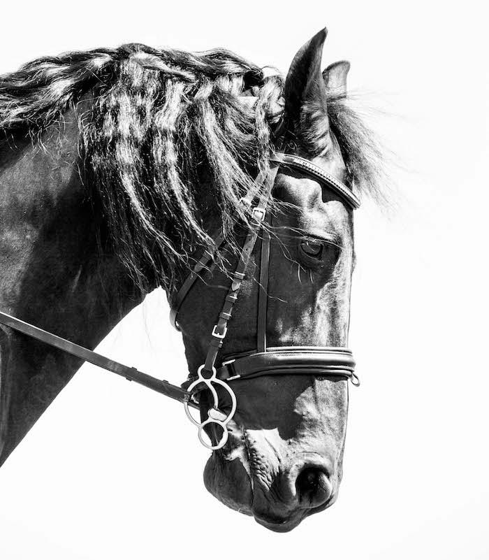 Duke – Friesian – Emma Lowe Horse Photography