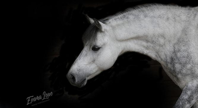 Teddy – Pony – Emma Lowe Horse Photography
